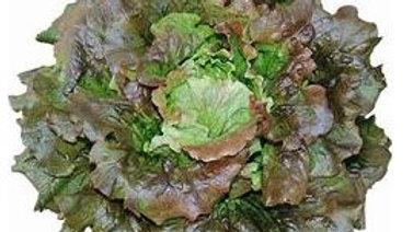 PROMO X2 Salade Batavia rouge
