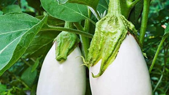 Aubergine blanche/kg