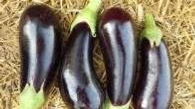Aubergine violette/kg