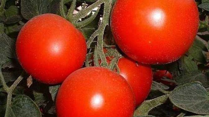 Tomate à cuire ronde rouge/kg