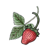 Strawberry 500x500.png