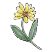 apothecary arnica.png
