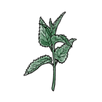 apothecary nettle.png