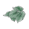 apothecary kava (1).png