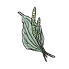 apothecary plantain.png