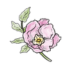 apothecary rose (1).png