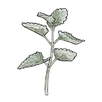 apothecary catnip.png