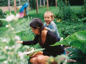 Adding Medicinal Herbs to your Garden