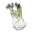 apothecary fennel.png