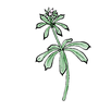 Cleavers 500x500.png