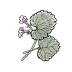 apothecary ground ivy.png