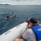 Copy of PASSION passengers wildlife dolp