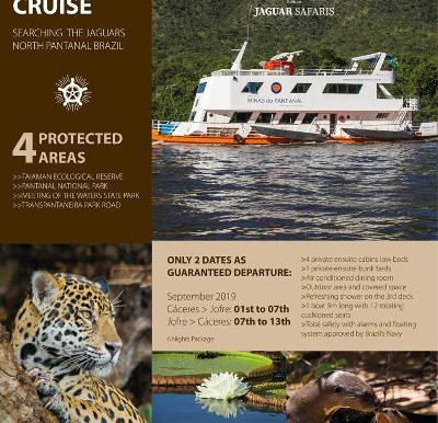 Searching the Jaguars of North Pantanal Brazil