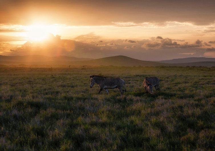 Zebra Sunset.jpg