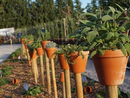 Vabilo na Delavnico sajenja rastlin! 🌱🎋🌼