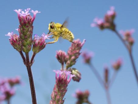 22. maj – Mednarodni dan biotske raznovrstnosti