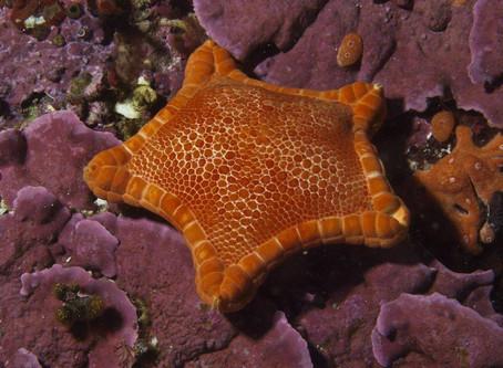 Morski ekosistemi 🐙🐟🦀🐡