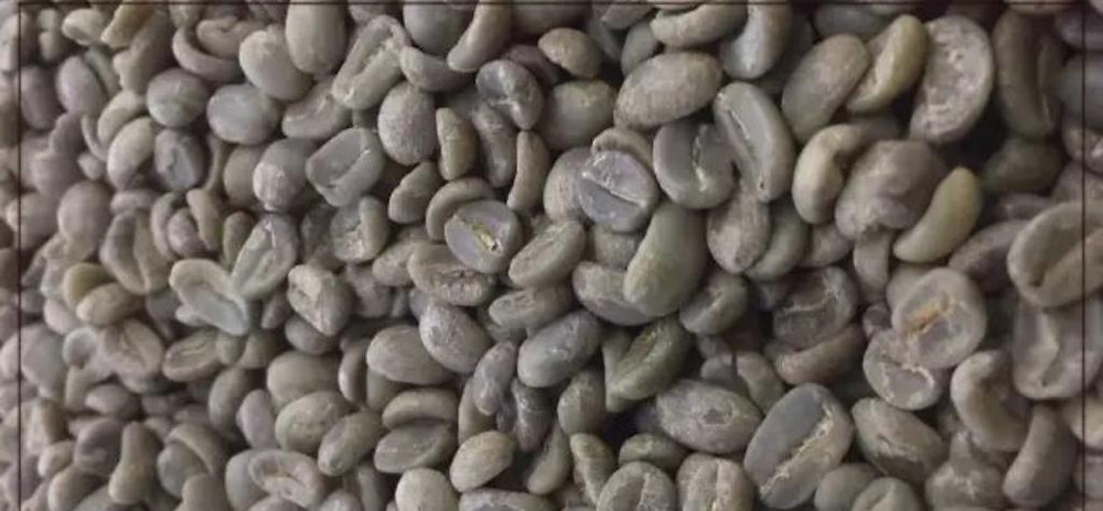Acatenango green bean