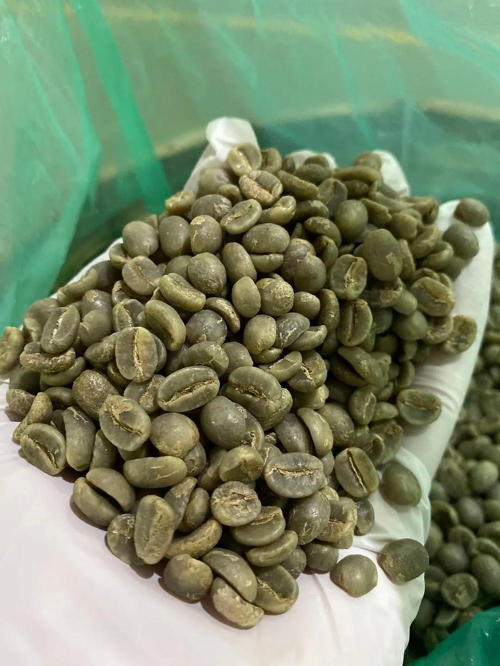 100%阿拉比卡豆種,鐵皮卡種