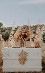 Pampas Grass .jpg