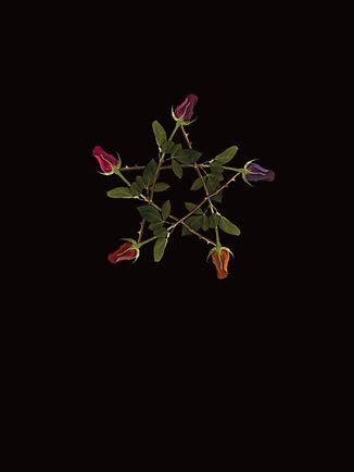 Pagan Wiccan Rose Pentagram Shirt