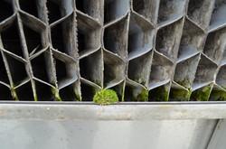 Algues dans la tour d'eau