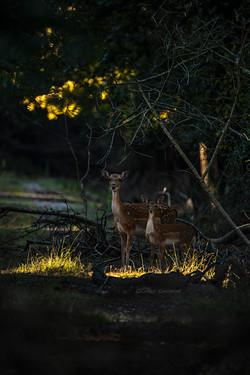 A tender couple