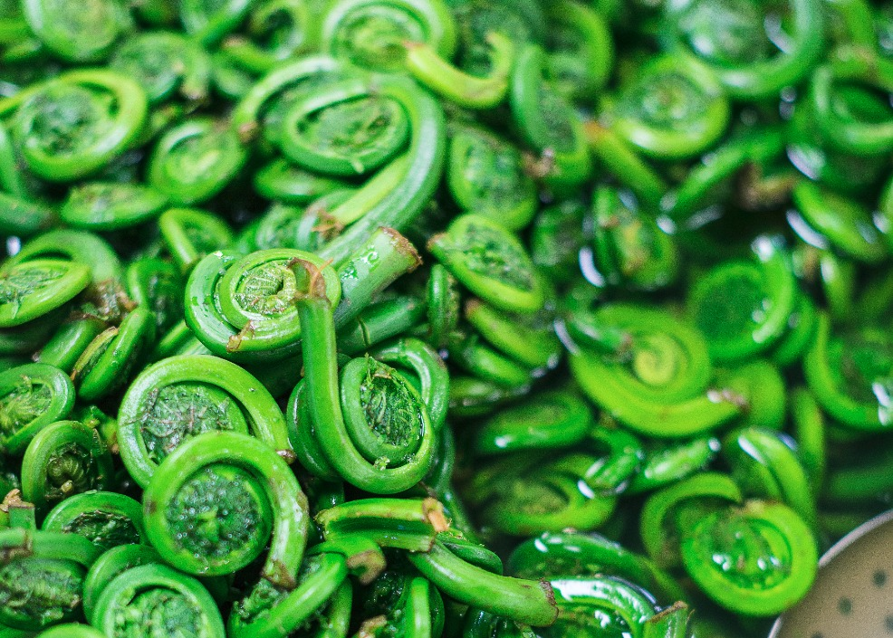 Ruma's Fiddleheads