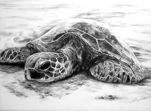 Turtle (price adjusted if request framed)