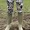 Thumbnail: Bass Huntress Leggings (Matt Finish)