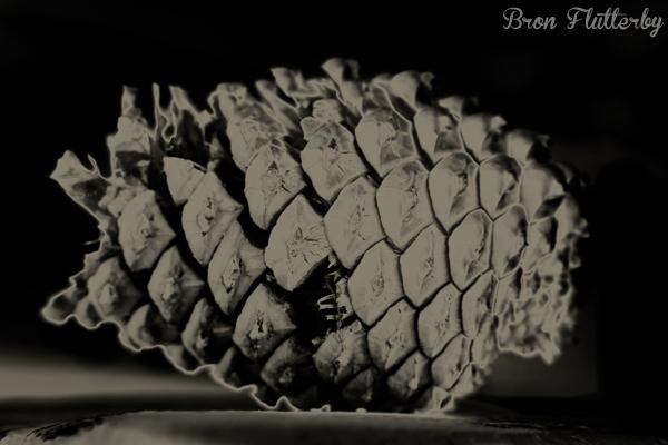 Pine Cone #2
