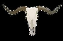 longhorn-skull.png