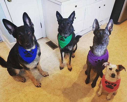 Good dog training=Awesome dog photos! #f