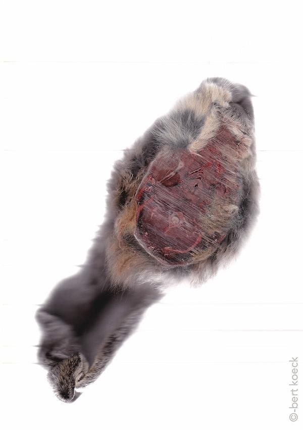 konijn-schijven-110414-82.jpg
