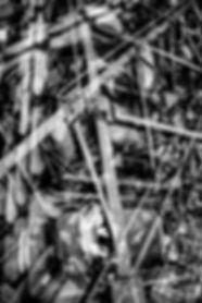 "body, exploring, long exposure, naked, physical, Rotterdam, Paris, galerie, luxury, expensive art, flatland, Abbott, contemporary art, studio, photography, conceptual art, art fair, Brussels, experimental art, bert koeck, New York , art scene, gallery, moma, London, Barcelona, mixed media, imaging, contemporary artist, experimental art, pixel, interdimensional data, DIY, toolbuilder, converted devices, art exhibition, philosophy, experiment, think process, techniques, nude, invention, exposure, muliple, bert koeck, tate modern, famous, international, expensive, exclusive, best, ferari, museum, academy, art, belgium, europe, ""bert koeck, conceptual photography, art, interdimensional datadating, dimension switches, reverse engeneering, NY-city-series, bert koeck, drifting districts, so you think you can flatten, flatland district, flat flight., conceptual photography"""