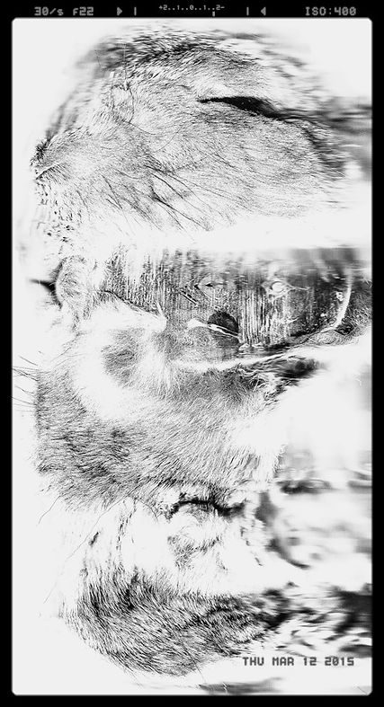 body, exploring, long exposure, naked, physical, Rotterdam, Paris, galerie, luxury, expensive art, flatland, Abbott, contemporary art, studio, photography, conceptual art, art fair, Brussels, experimental art, bert koeck, New York , art scene, gallery, moma, London, Barcelona, mixed media, imaging, contemporary artist, experimental art, pixel, interdimensional data, DIY, toolbuilder, converted devices, art exhibition, philosophy, experiment, think process, techniques, nude, invention, exposure, muliple, bert koeck, tate modern, famous, international, expensive, exclusive, best, ferari, museum, academy, art, belgium, europe, powers of ten, charles and ray eames, deep frozen rabbits, slices, scanning new worlds, bert koeck