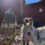Screen Shot 2019-03-24 at 1.38.02 PM.png