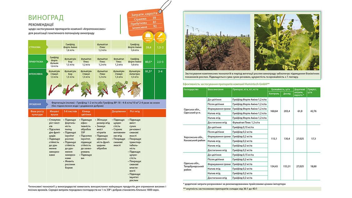 Технологія вирощування винограду