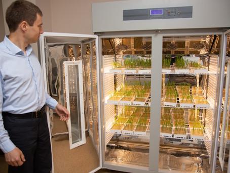 Стрессы у растений: как получать стабильные урожаи в период изменения климата