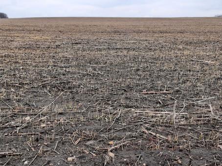 Відновлення вегетації озимої пшениці.