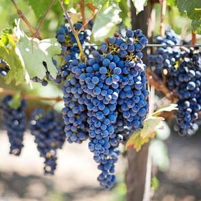 Покращення якості винограду