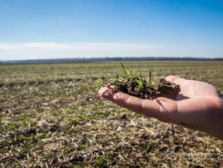 Виклики для агрономів, ризики, можливі рішення у вирощування пшениці, ячменю, сої та кукурудзи