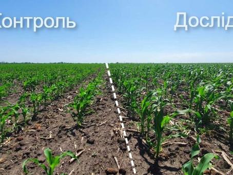 Аграріям продемонстрували ефект від фульвових кислот на кукурудзі