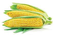 кукурудза.jpg