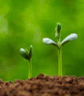 preparing-seedlings-1024x683.jpg