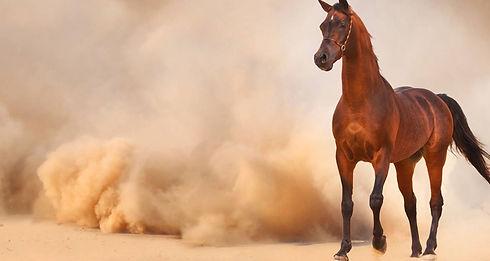 balade-cheval-ouarzazate.jpg.1500x800_q7