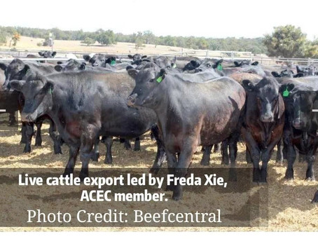 2021-The Year of Ox- Would we be able to export more beef to China?