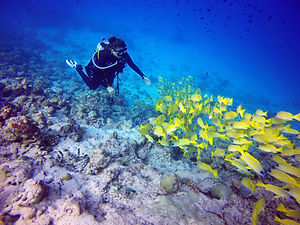Scuba_Diving_2_By_Roberta-Mancino.jpg