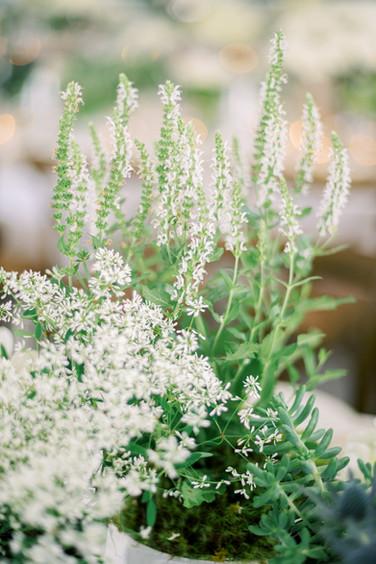 lake-normal-wedding-056.jpg