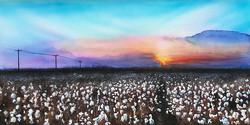 Locke_Pam_Cotton Sunset
